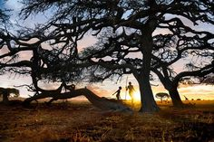 """""""Photo by @stevemccurryofficial // I shot this picture of a man's silhouette at sunset in one of two dozen national parks in South Africa. About 4% of the…"""""""