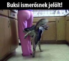 Very interesting post: Funny Dogs - 31 Pictures. Also dompiсt.сom lot of interesting things on Funny Dog. Funny Fails, Funny Dogs, Funny Memes, Funny Sayings, Animal Memes, Funny Animals, Weird Pictures, Daily Funny, Jokes Quotes