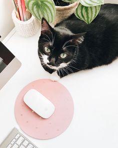 Eu não aguento essas gatas perfeitas Instagram Blog, Cute, Animals, Gatos, Animales, Animaux, Kawaii, Animal, Animais