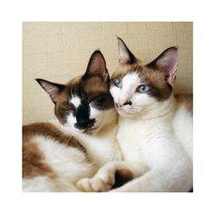 猫色日記2