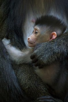Female mandrill Kesi gave birth to a cute baby boy-drill. Check out that rockin' mohawk :)