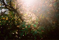 pretty light... by timrobisonjr