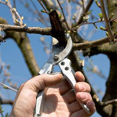HOME DZINE Garden Ideas | Time to prune your shrubs and trees