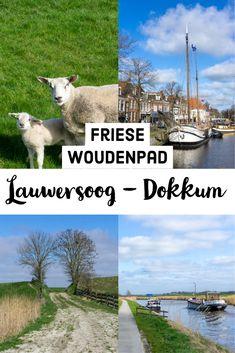 Op een koude dag in april wandel ik van Lauwersoog naar Dokkum, door Nationaal Park Lauwersmeer. Dit is het eerste stuk van het Friese Woudenpad. Dit is onderdeel van het langere Diagonaalpad, dat heel Nederland doorkruist. #langeafstandswandeling #LAW #wandeltip