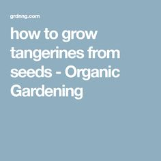 how to grow tangerines from seeds - Organic Gardening