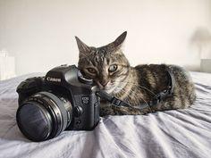 Cat-ographer by maytetxu, via Flickr
