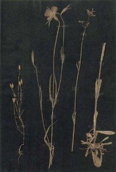 Paul Klee, Herbarium.
