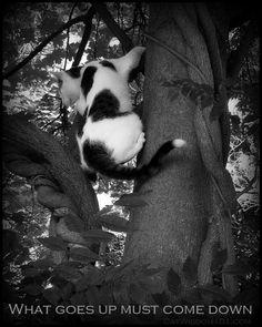 Odin climbing tree quote