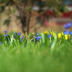 The Best Bulbs to Plant in Your Lawn Add no-maintenance spring color to your landscape by naturalizing carefree bulbs in your lawn and landscape.