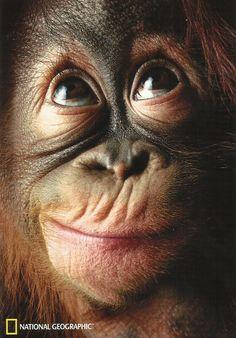 orangutan - Buscar con Google