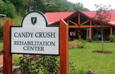 Candy Crush rehab…