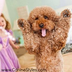 Throw your hands in the air and wavy em like you just don't care! @PennyPoodle9975   #Paws up when you get www.CanineStyles.com goodies in the mail!  #CanineStyles #ShopOnline