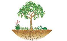 Bäume erfolgreich unterpflanzen