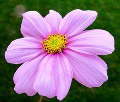 In voller Blüte von Illusionen