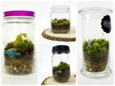 DIY Moss Terrarium // Moss Love Terrariums