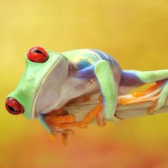 Tree Frog- this is the pet I wanted when I was younger.