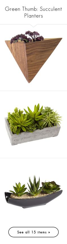 """""""Green Thumb: Succulent Planters"""" by polyvore-editorial ❤ liked on Polyvore featuring succulentplanters, home, home decor, small item storage, home wall decor, interior wall decor, flower stem, flower planter boxes, geometric home decor and outdoors"""