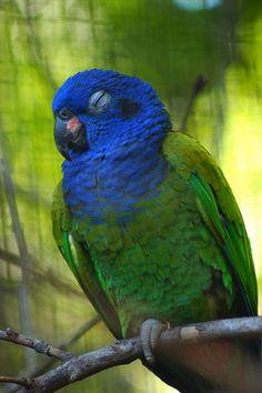 Parque das Aves, Foz do Iguaçu, Brasil 6282-a
