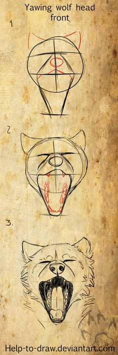 wolf/dog head tutorial nr.3 (yawing, front) by CasArtss