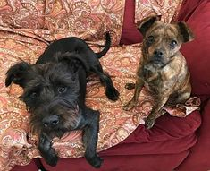 1-7-18, Peanut & China - bonded pair- good with cats, dogs, humans, for adoption in New York, NY who needs a loving home.