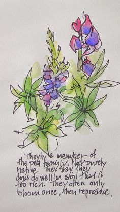 I like this loose style of sketching  Sketchbook Wandering: Lupines Close Up
