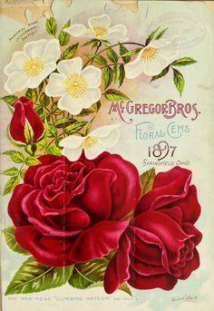 Images Vintage, Vintage Diy, Vintage Labels, Vintage Cards, Vintage Postcards, Impressions Botaniques, Seed Art, Vintage Seed Packets, Seed Packaging