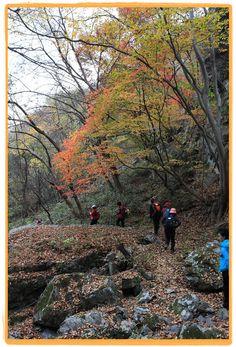 Hiking Chuwolsan Mountain in #Damyang, Korea