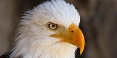 Urge the US Government to Take Action: 314 species of birds ... - Care2 News Network