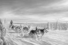 Finland 2 by antti viitala Holiday Destinations, Holiday Travel, Animal Photography, Finland, Vintage Photos, Wander, Dog Lovers, Tourism, Black And White