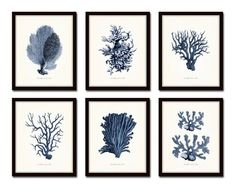 Vintage Indigo Blue Sea Coral Print Set No. 2 – Belle Maison Art