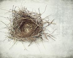 "Nature photography bird nest print natural history art neutral gray white photography rustic modern decor ""A Little Home"" by LupenGrainne on Etsy https://www.etsy.com/au/listing/114122943/nature-photography-bird-nest-print"