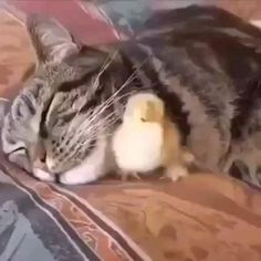 Funny Animal Videos, Funny Animal Pictures, Cute Funny Animals, Cute Baby Animals, Animals And Pets, Funny Cats, Cute Funny Baby Videos, Beautiful Cats, Animals Beautiful