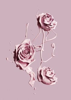 Wallpaper Pink Vintage Roses Ideas For 2019 Ps Wallpaper, Trendy Wallpaper, Flower Wallpaper, Cute Wallpapers, Wallpaper Backgrounds, Wallpaper Ideas, Iphone Backgrounds, Screen Wallpaper, Tout Rose
