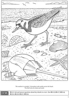 Welcome To Dover Publications BOOST Seashore Activity Book Coloring