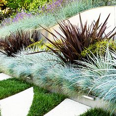 Blue fescue with Puya coerulea, threadleaf nandina, and 'Ever Red' phormium, with incredible grass and hardscape patterning at the base. The patterns were laid out on graph paper, then the concrete was poured (in one day). Afterwards, grass was planted in soil that fills the spaces between pavers.