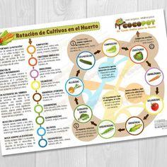 La rotación de cultivos es una práctia esencial en el cultivo ecológico, nos permite regenerar y mejorar las propiedades del sustrato de forma natural, permitiendo que se recupere tras cada temporada de cultivo