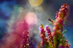 The weaver of light by Magda Wasiczek on 500px