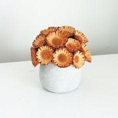 Protea mound-  Dried flower arrangement