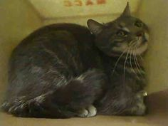 2nd Chance!! NYC **Sweet Year Old Boy** TO BE DESTROYED 03/27/15 TIM tolerates attention & petting but may be fearful in the shelter, & may be intimidated by small children. . ID # A1030574. Male gray tabby & white about 1 YEAR STRAY. I came in with Group/Litter #K15-005744. https://www.facebook.com/nycurgentcats/photos/a.978552318829422.1073742636.220724831278845/978552488829405/?type=3&theater