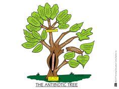 Antibiotic Tree | Nursing Mnemonics and Tips