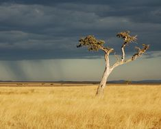 Travel, Savanna, Africa, Kenya, Storm, Rain #travel, #savanna, #africa, #kenya, #storm, #rain