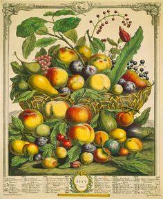Fruits of the Season - Summer by Robert Furber - art print from King & McGaw