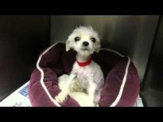 This Video Proves That The Tiniest Puppy Has The Biggest Impact! Watch Her Rescue | The Animal Rescue Site Blog