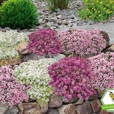 Bodendecker gegen Unkraut Ground cover against weeds Ground cover set thyme 9 plants The post ground cover against weeds appeared first on curtains ideas. Amazing Gardens, Beautiful Gardens, Comment Planter, Plant Covers, Diy Garden Projects, Plantation, Flowers Nature, Rare Flowers, Exotic Flowers