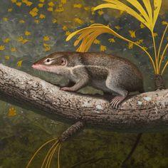 Juramaia sinensis by Aleksey Malitsky