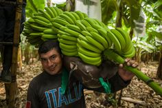 Learn more about the issues the million plus farmers and workers in over 74 countries face to produce products we use like coffee, chocolate and bananas. Food Staples, Fair Trade, Bananas, Farmer, Countries, Challenges, United States, Fruit, People