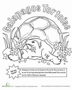 First Grade Animals Worksheets: Color the Galapagos Tortoise