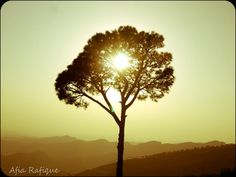 sun  - Photography by Afia Rafique in My photography at touchtalent 12827