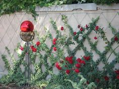 Arlington Garden in Pasadena - Espalier Ivy Wall( look at the ball what is the stand made of? Beautiful Flowers Pictures, Beautiful Flowers Garden, Flower Pictures, Red Flowers, Red Roses, Ivy Rose, Ivy Wall, Climbing Roses, Climbing Wall