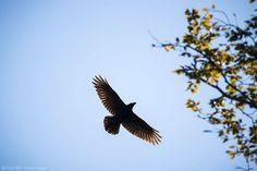 Facebook Photos, Bird, Animals, Angel, Animales, Animaux, Birds, Animal, Animais